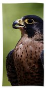 Peregrine Falcon - Beak Open Beach Towel by Sue Harper