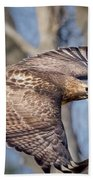 Red Tailed Hawk Flying Beach Towel