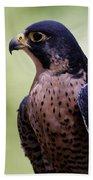 Peregrine Falcon - Profile Beach Towel by Sue Harper