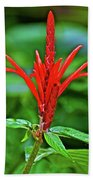 Red Tropical Flower In Huntington Botanical Gardens In San Marino-california  Beach Sheet