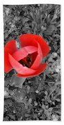 Red Tulip From Above Beach Towel