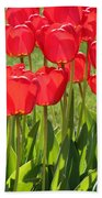 Red Tulips Square Beach Towel