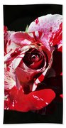 Red Verigated Rose Beach Towel