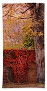 Red Vine With Maple Tree Beach Sheet