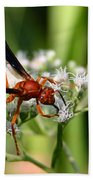 Red Wasp On Lace Beach Towel