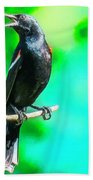 Red Wing Blackbird Perching And Singing Beach Towel