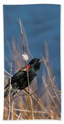 Red-winged Blackbird On Cattail  Beach Towel