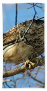 Redtail Among Branches Beach Towel