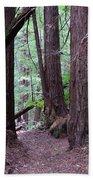 Redwood Grove Beach Towel