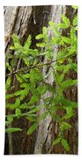 Redwood Tree Art Prints Baslee Troutman Beach Towel