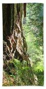 Redwood Tree Art Prints Redwoods Forest Beach Towel