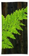 Redwood Tree Forest Ferns Art Prints Giclee Baslee Troutman Beach Towel