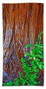 Redwood Tree Trunk At Pilgrim Place In Claremont-california   Beach Towel