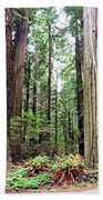 Redwood5 Beach Towel