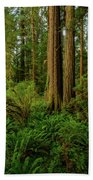 Redwoods And Ferns Beach Towel