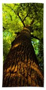Redwoods Beach Towel