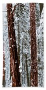Redwoods In Snow Beach Towel