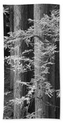 Redwoods Ir 0625 Beach Towel