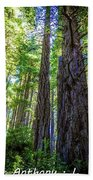 Redwoods National Forrest Trees Of Mistery Beach Towel