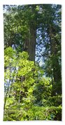 Redwoods Trees Forest Art Prints Baslee Troutman Beach Towel