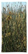 Reeds II Beach Towel