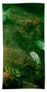 Reef Life Off Hawaii Beach Towel