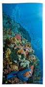 Reef Scene With Corals And Fish Beach Sheet
