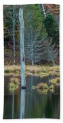 Reflected Tree Beach Sheet