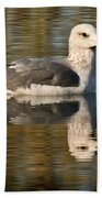 Young Gull Reflections Beach Towel