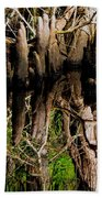 Reflection Of Cypress Knees Beach Towel