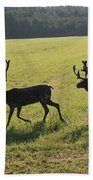 Reindeers On Swedish Fjeld Beach Towel