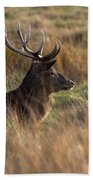 Relaxing Deer Beach Towel