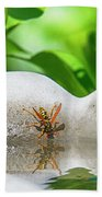 Reflected Little Stinger Taking A Sip 2 By Chris White Beach Towel