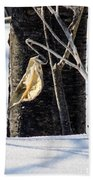 Remnant Seed Pod Beach Towel