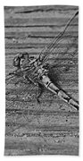 Resting Dragonfly -bw Beach Towel