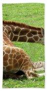 Resting Giraffe Beach Towel