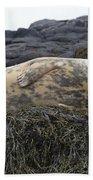 Resting Gray Seal On Seaweed Beach Towel
