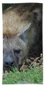 Resting Hyena Beach Towel