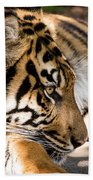 Resting Yet Watchful Tiger Beach Towel