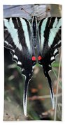 Resting Zebra Swallowtail Butterfly Square Beach Towel