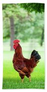 Rhode Island Red Rooster Beach Towel