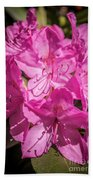 Rhododendron-close Up1 Beach Towel
