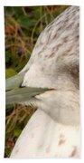 Ring Billed Gull Profile Beach Towel