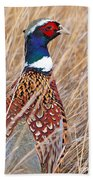 Ring-necked Pheasant  Beach Towel