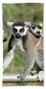 Ring Tailed Lemurs With Baby Beach Towel