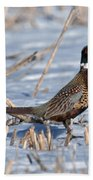 Ringneck Pheasant Rooster In Snow Beach Towel