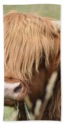 Ringo - Highland Cow Beach Towel