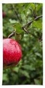 Ripe Apples. Beach Sheet