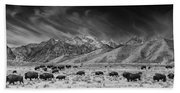 Roaming Bison In Black And White Beach Towel