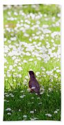 Robin In A Field Of Daisies Beach Towel